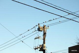 鳥・鳥・鳥
